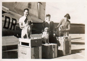 Three of Hyacinth Mellish's puppies on their way to England on March 31, 1949.